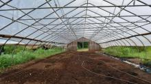 IMAGES: Organic, sustainable and local: Coon Rock Farm