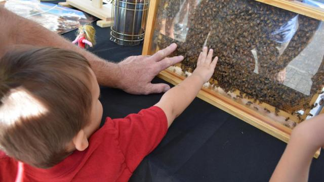 Bees were a huge part of BugFest at the North Carolina Museum of Natural Sciences on Sept. 20, 2014.