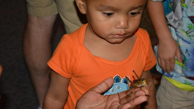 People got to get hands-on with roaches, grasshoppers and more at Bugfest at the North Carolina Museum of Natural Sciences on Sept. 20, 2014.