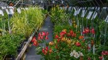 IMAGES: Plant Delights Nursery, Inc.