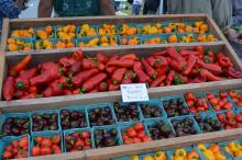 Abundance NC's Pepper Festival was held at Briar Chapel in Chapel Hill on Sept. 27, 2015.
