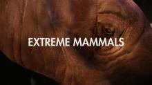 EXTREME Mammals in your backyard!