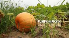 Phillips Farms is pumpkin central