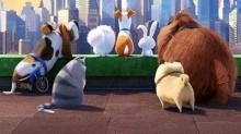 IMAGE: New movies this week: Secret Life of Pets, Mike & Dave Need Wedding Dates