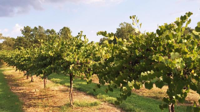 Cloer Family Vineyard