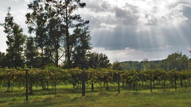 Cloer Family Vineyard