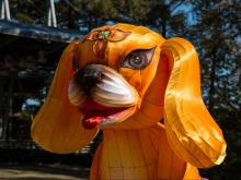 Crews are setting up the North Carolina Chinese Lantern Festival, which runs Nov. 25 through Jan. 15, 2017, at Koka Booth Amphitheatre in Cary.