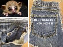 Lemur pockets