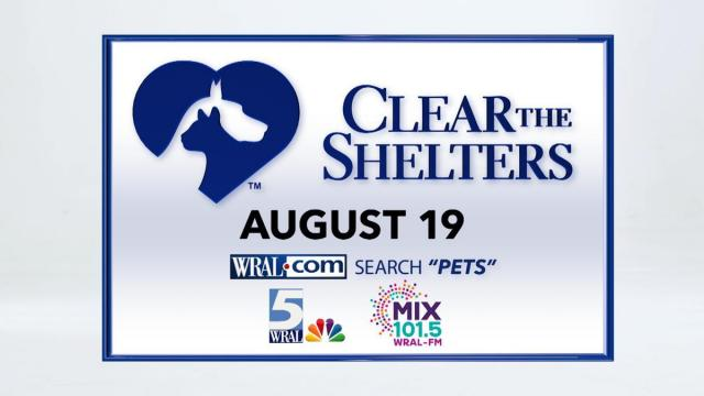 Give a homeless pet their forever home on Aug 19.