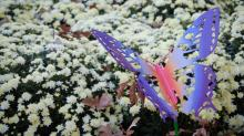 IMAGES: State Fair garden in bloom