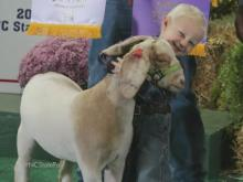 4-year-old returns to State Fair to show winning livestock