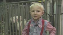 IMAGE: Zade Jennings back at fair to show winning livestock
