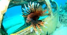 IMAGE: Florida will host competition to kill invasive lionfish