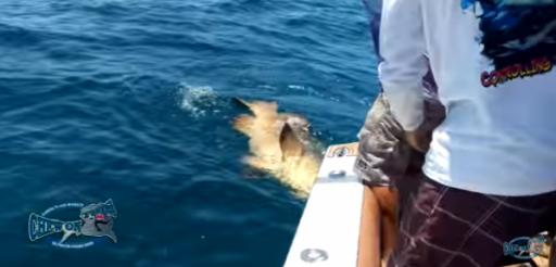 A new YouTube video shows what happens when a goliath grouper decides to turn the tables on a fisherman. (Deseret Photo)