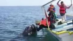 Whale watchers get up close and personal
