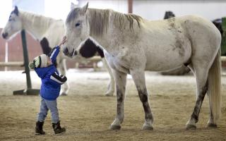 Mason LaDouceur, 5, of Adams, Mass., greets Zephyr during a Berkshire HorseWorks open house on Saturday, March 18, 2017, at Berkshire Equestrian Center in Richmond, Mass. (Deseret Photo)