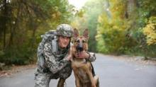 IMAGE: The U.S. Postal Service Is Honoring Military Working Dogs With New Forever Stamps