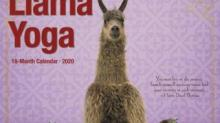 IMAGE: This Adorable Llama Yoga Calendar Is Just What You Need For 2020