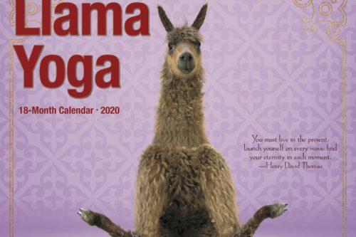 This Adorable Llama Yoga Calendar Is Just What You Need For 2020 (Simplemost Photo)