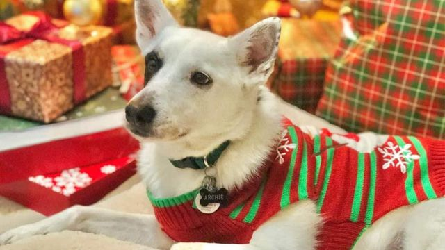 Best Dog Christmas Sweater 2020 (Don't Waste your Money Photo)