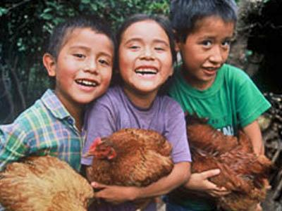 These Mexican children benefit from the donation of chickens, which they can use for meat and eggs to eat and for breeding to make money.