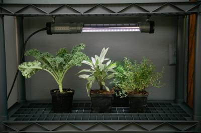 Plants flourish under a fluorescent light. (Deseret Photo)