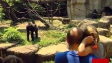 IMAGE: Parenting distractions, and what I've learned from the tragedy at the Cincinnati Zoo
