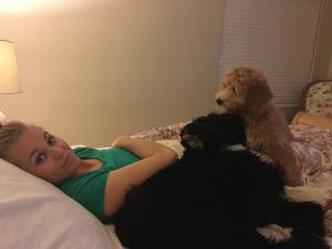 Cowboy, Millie and Carmen share a bed. Dog sitting was a fun but crazy adventure! (Deseret Photo)