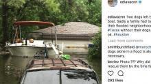 IMAGE: CNN reporter shares photo of two dogs left behind by family fleeing Harvey storm