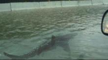 IMAGE: No, there isn't a shark swimming down a Houston freeway, and other fake viral photos from Harvey
