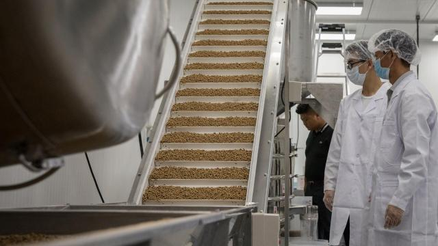Employees watch finished tapioca pearls, or boba, climb a conveyor belt at the US Boba Company factory in Hayward, Calif., Sept. 7, 2018. The Boba Guys chain has opened a Bay Area factory to produce the tapioca pearls that define the popular drink. (Erin Lubin/The New York Times)