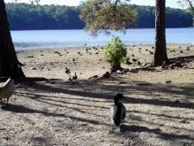 Waterfowl at Lake Johnson Park