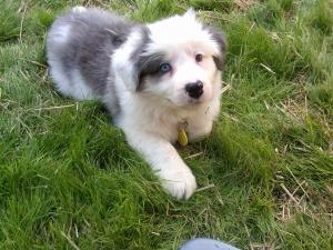 Lynda Loveland's family has a new puppy.