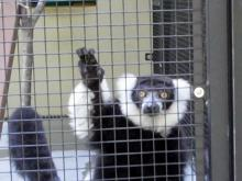 Duke Lemur Center