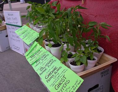 Backyard gardeners can get ideas and seedlings at the Midtown Farmers' Market.