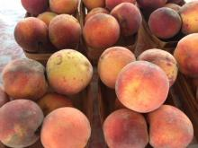 Peaches in the recall originated in California.