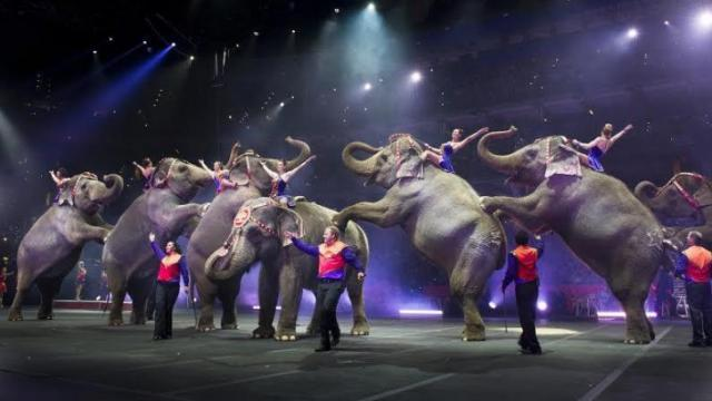 Ringling Bros. and Barnum & Bailey Circus stops at PNC Arena in Feburary 2014.