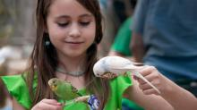 Feeding parakeets at the Landing Zone at Sylvan Heights Bird Park