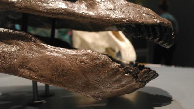 Spoon-shaped teeth helped plant-eating dinosaurs strip leaves from vegetation.