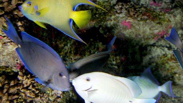 Complaint Questions Legality Of State Aquarium Project Wral Com