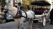 Horse drawn carriage in Wilmington