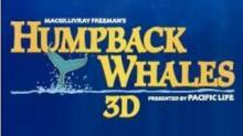 IMAGE: 'Humpback Whales 3D:' Inspiring, fascinating, breathtaking