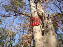 Signs on the trees indicate which ones go along with the recordings.