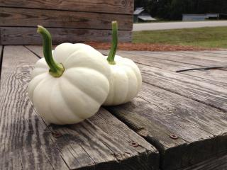 The farm boasts a real pumpkin patch with 37 varieties.