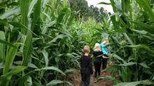 IMAGES: Where are Raleigh, Triangle area corn mazes, pumpkin patches, haunted trails? Our database has the answers