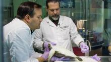 IMAGES: Destination: Window on Animal Health at the N.C. Museum of Natural Sciences