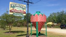 IMAGES: Strawberries at Porter Farms & Nursery