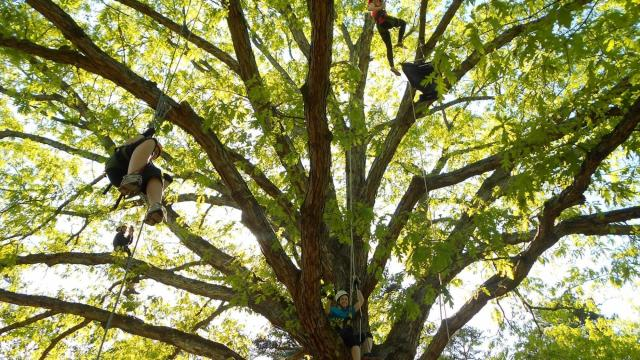 Piedmont Tree Climbing offers recreational tree climbing for ages 6 and up in Orange County. Courtesy: Piedmont Tree Climbing