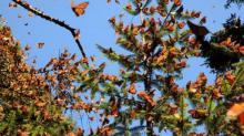 IMAGES: Natural sciences museum premieres 'Flights of Butterflies 3D' Thursday