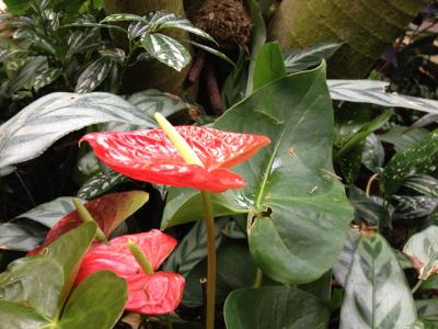 Tropical flower in the zoo's Forest Aviary